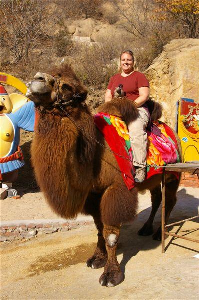 Finally, a camel!