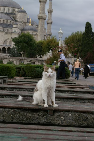 Cat at Blue Mosque