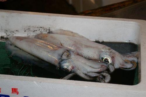 Magical squid