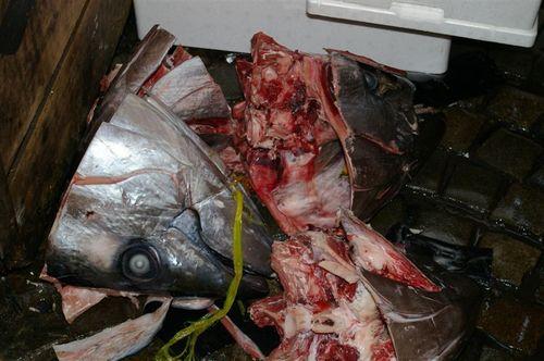 Tuna heads