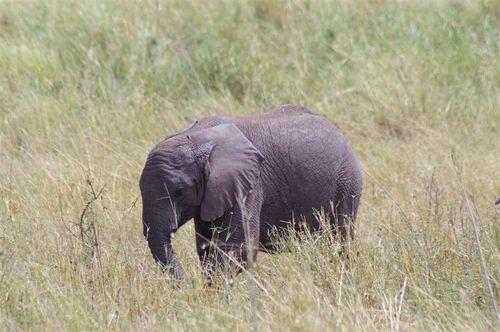 Baby Tembo