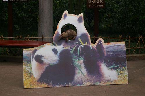Panda Pretender